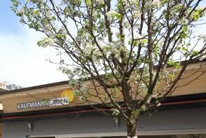Blühender Baum Kopie